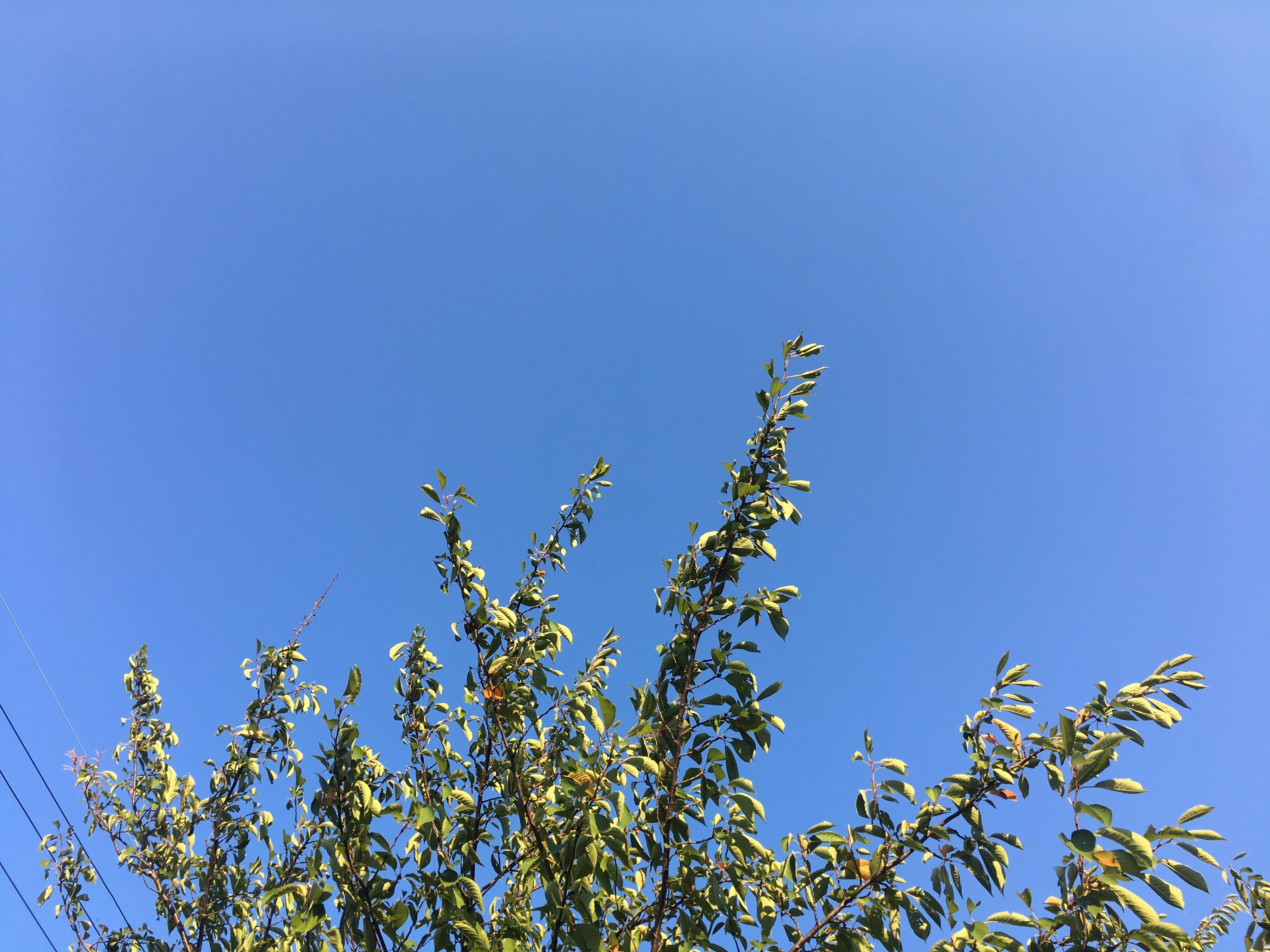 秋空の画像